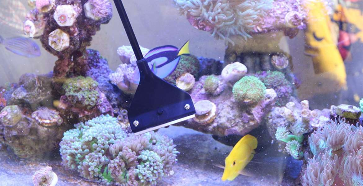 Aquarium Cleaner Buying Guide