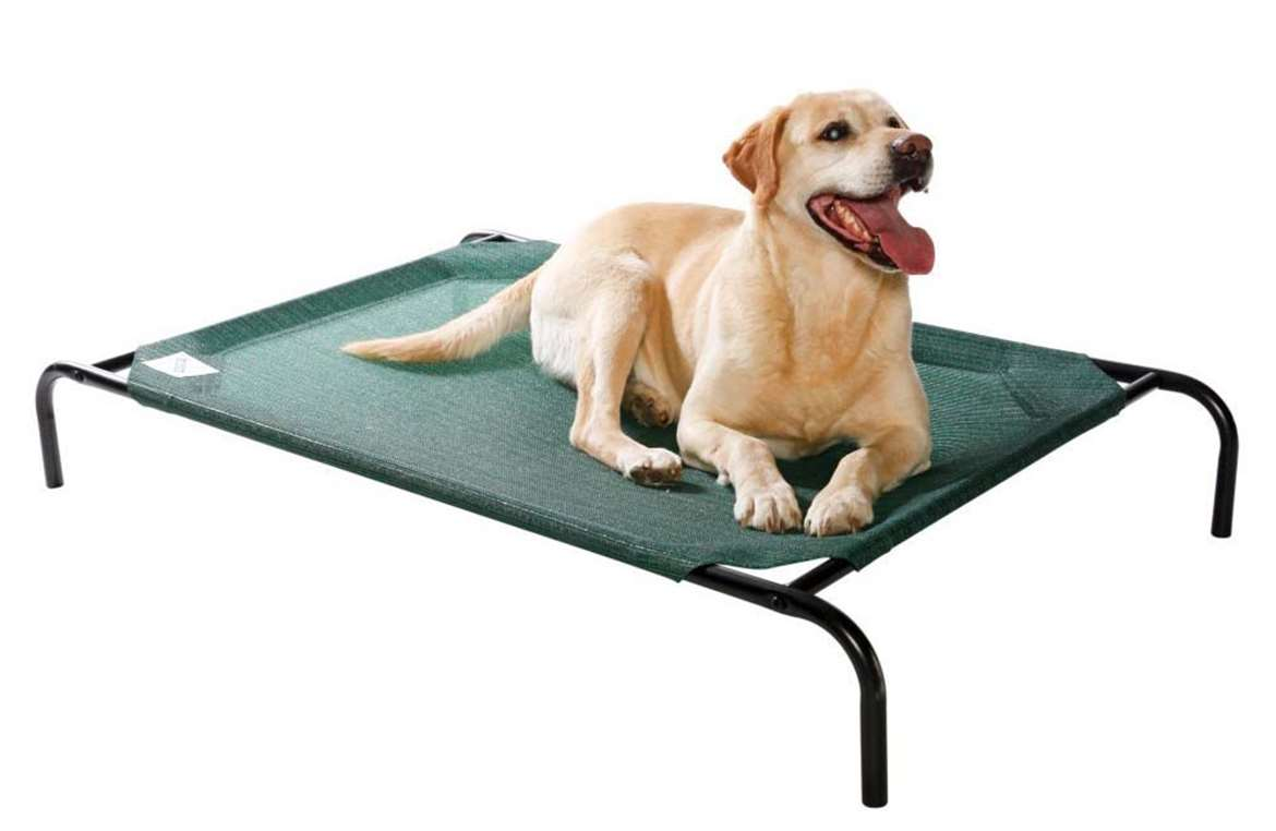 Dog Beds Top 10 Rankings