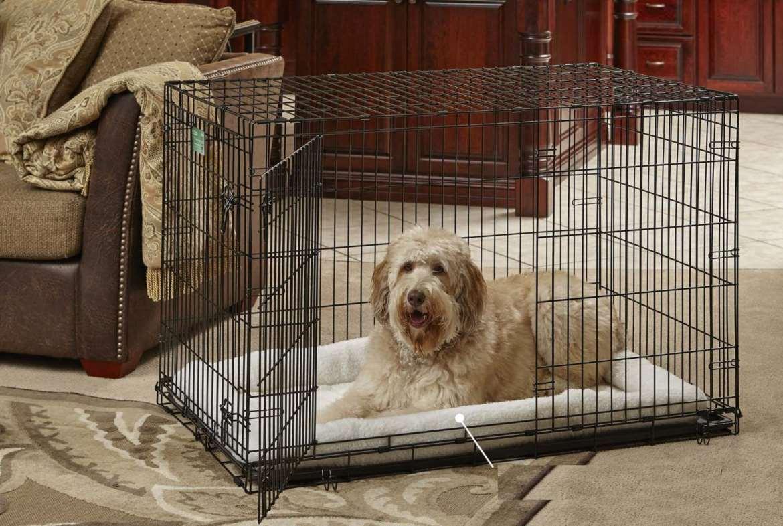 Dog Houses Top 10 Rankings