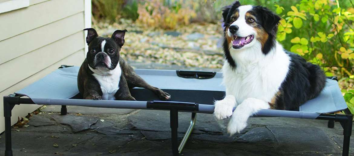 Dog Beds Buying Guide