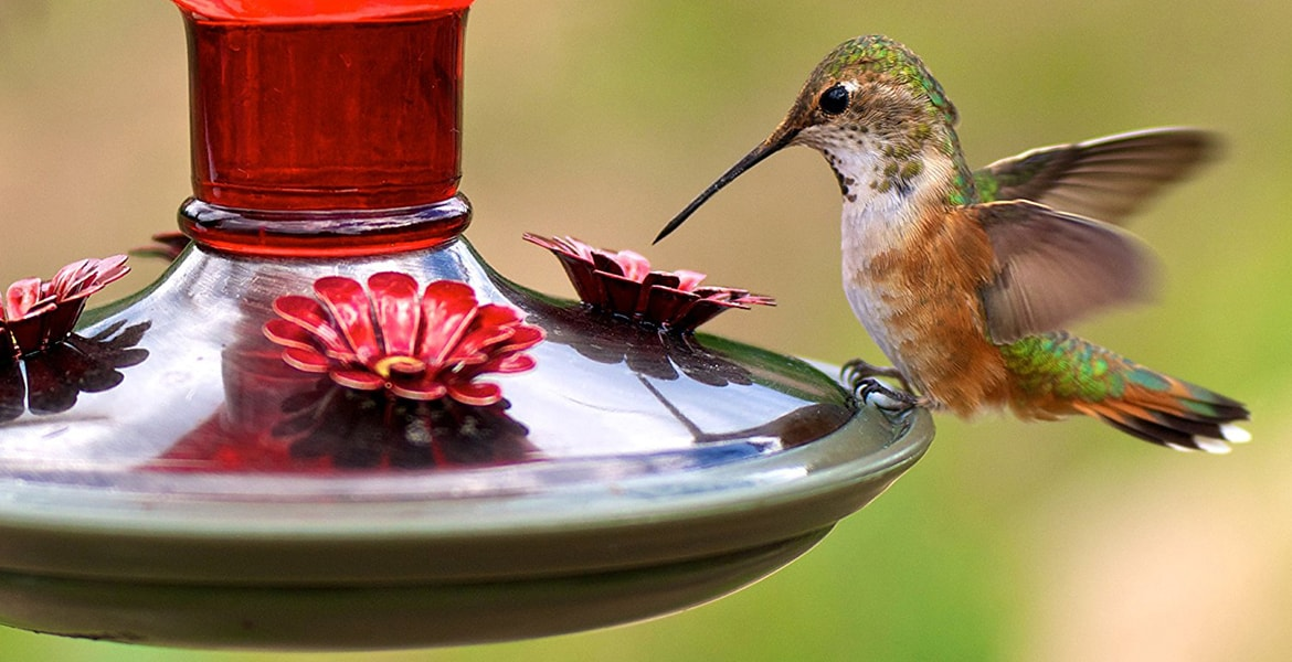 Bird Feeder Top 10 Rankings