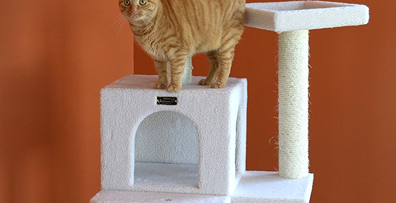 Cat Activity Tree Top 10 Rankings