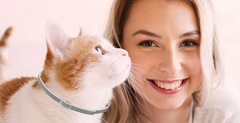 Cat Flea & Tick Control Top 10 Rankings