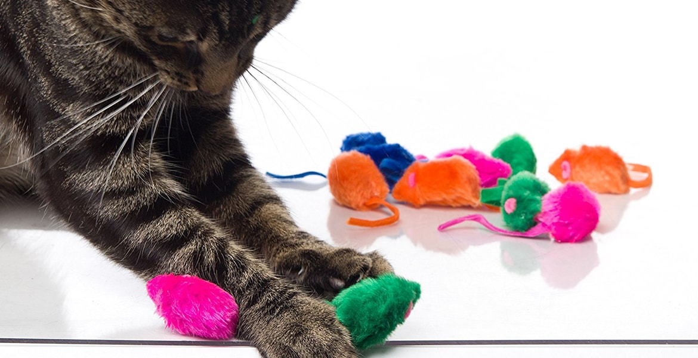 Cat Toy Top 10 Rankings