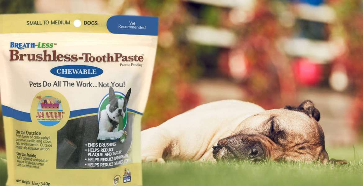 Dog Toothpaste Top 10 Rankings
