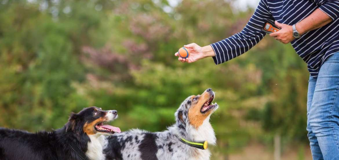Dog Training Collar Buying Guide