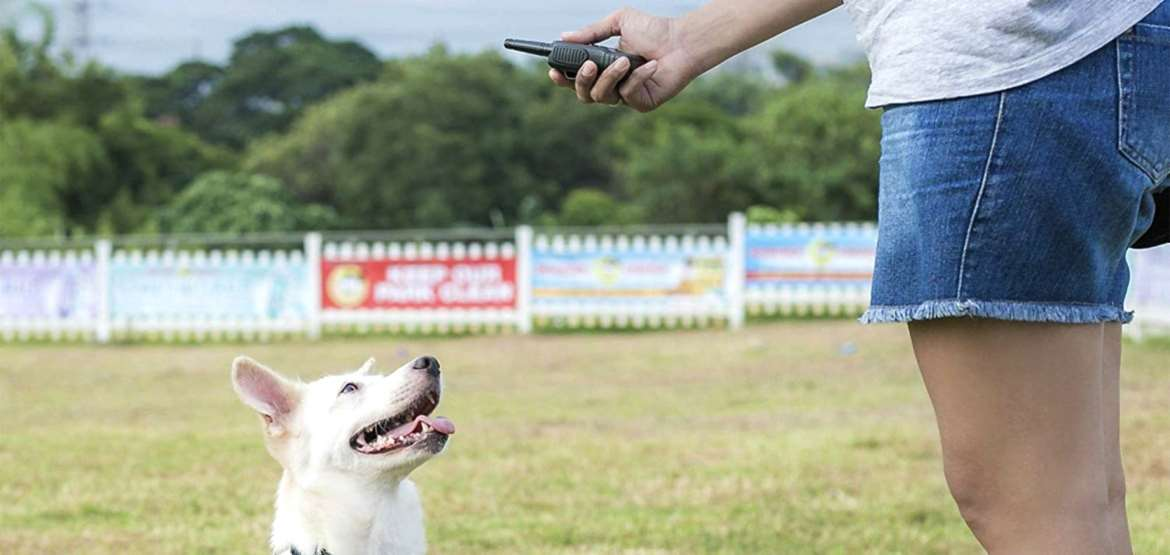 Dog Training Collar Top 10 Rankings