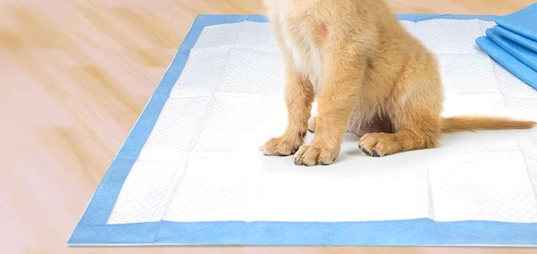 Dog Training Pad Top 10 Rankings