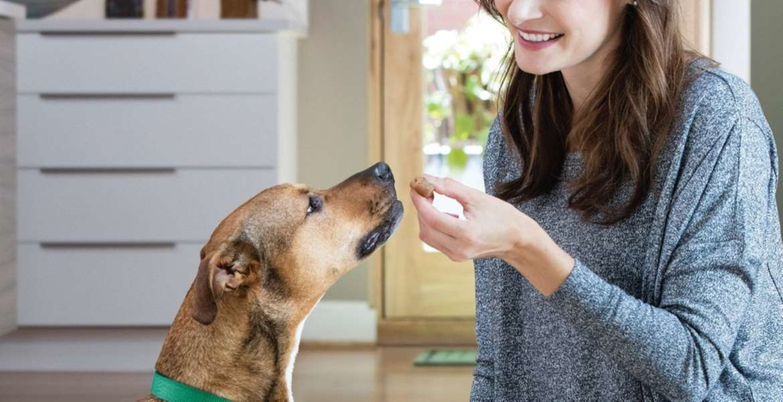 Dog Treat Top 10 Rankings