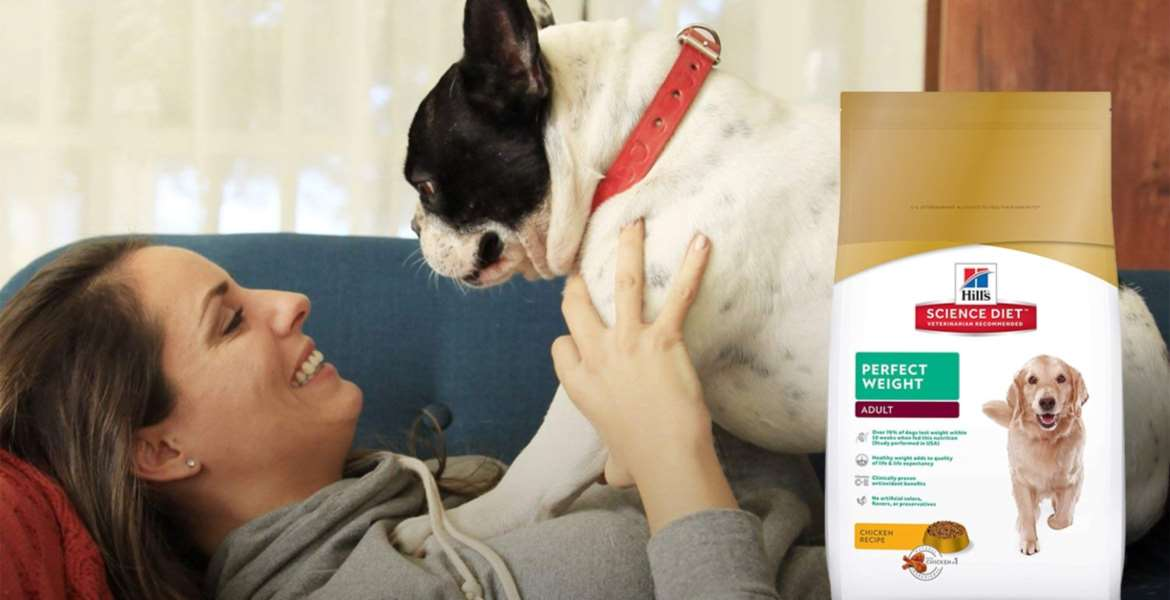 Dry Dog Food Buying Guide