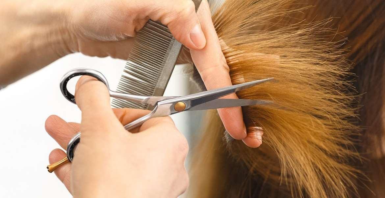 Hair Cutting Shears Top 10 Rankings