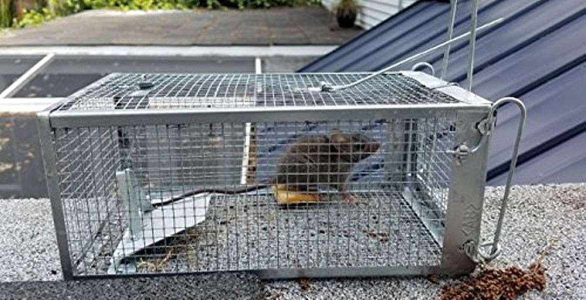 Pest Control Trap Buying Guide