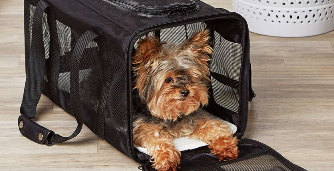 Pet Carrier Top 10 Rankings
